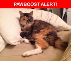 Please spread the word! Bootsie was last seen in Jacksonville, FL 32224.  Description: Med hair silky calico, no chip. Spayed green tattoo on  belly. Small black dot lower lip.   Sweet gentle timid social will growl if scared, dose not scratch . Don't chase   Nearest Address: 3816 Burnt Pine Drive, Jacksonville, FL, United States