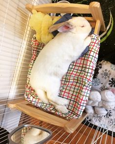 I wish my bunny would sleep on the bed like that I have for him