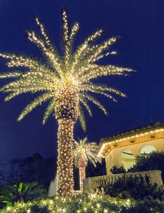 Twinkle lights in the palms.