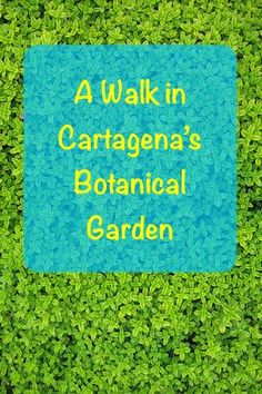 One day I decided to take a walk in Jardín Botánico Guillermo Piñeres. Jardín Botánico Guillermo Piñeres is an awesome botanical garden in Cartagena. It was a bit of an effort to get there, but it was definitely worth it.I dare say that Jardín Botánico Guillermo Piñeres is one of the best...