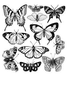 4 Free Adult Coloring Book Page Printables! Color yourself and then modge podge these butterflies on anything!