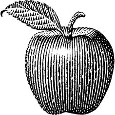 Scratchboard illustrations by Michael Habert done with a woodcut or engraved look. Engraving Illustration, Botanical Illustration, Cartoon Drawings, Drawing Sketches, Apple Clip Art, Ink Logo, Apple Picture, Wine Bottle Design, Art Basics