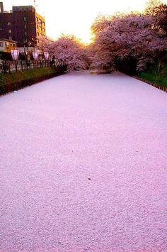 So beautiful. River covered in cherry blossoms, my faviorte flower