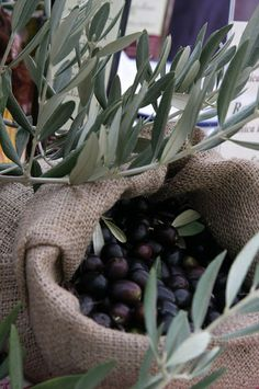 .olive tree #essenzadiriviera.com #skincare