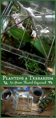 How to create a terrarium~ a fun DIY project to add a little green indoors. Easy and self-sustaining, best of all, no green thumb required!