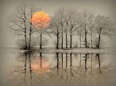 winter fairytale Photo by Willem Slagter — National Geographic Your Shot Beautiful World, Beautiful Places, Beautiful Pictures, Simply Beautiful, Amazing Photography, Nature Photography, Winter Scenes, Tree Art, Nature Pictures