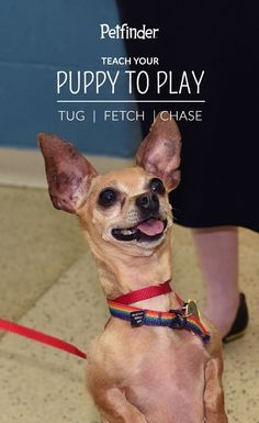 Play is essential for dogs' mental and physical well-being, and is an important way for them to communicate with other animals and people. Games like tug, fetch and chase all speak to pups' natural urges and stimulate their minds. https://www.vetstreet.com/our-pet-experts/teach-your-puppy-to-play?utm_term=&utm_content=buffer35002&utm_medium=social&utm_source=pinterest.com&utm_campaign=buffer