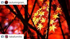 皆様ありがとうございました 記録用Repostですのでスルーしてください Thank You!! #Repost @autumngram_ with @repostapp.  Here is today's feature on @autumngram_ Chosen by: @david_wimble     Photo taken by :- @takafumiito .    CONGRATS be sure to show their work some love and visit their page.  Want to be featured on @autumngram_? Step 1 follow @autumngram_  Step 2 use #autumngram on your photos