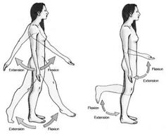 Learn Anatomy Online: Terms of movement