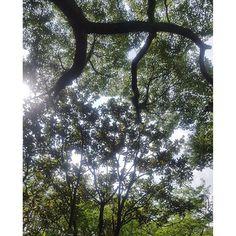 【fairy.tom】さんのInstagramをピンしています。 《公園の中にいるとちょっと涼しいです 大樹にパワーもらってリフレッシュ  #公園#森#tree#パワースポット#木陰》