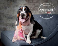 Available for adoption at Animals First Foundation of Texas
