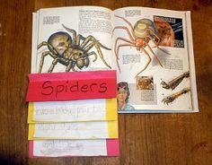 Charlotte's Web fact book
