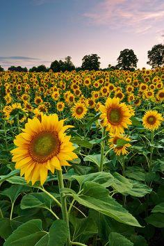 Photo under the sun par Roland Moser on - Picture taken last july near Solothrun/Switzerland