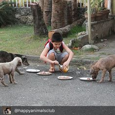 What a great post Ken!!. Congrats to you & all of you fab people @happyanimalsclub You are so very much lved and appreciated. Your parents should be so proud of you young man!!  I'm so glad to have come across your amazing story & can think of no more worthwhile cause to donate to every month.  Long live the shelter for many years to come!!. #adoptdontshop #nokillshelter #animalloversofinstagram  Repost @happyanimalsclub   exactly 3 years ago today ken fed a family of strays. what happened…