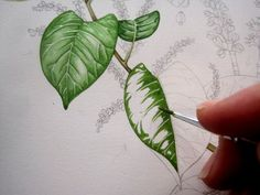 Lizzie Harper watercolour step 1 in painting a leaf