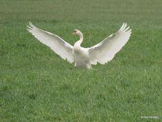 De landing ... http://godisindestilte.blogspot.nl/2018/01/de-landing.html