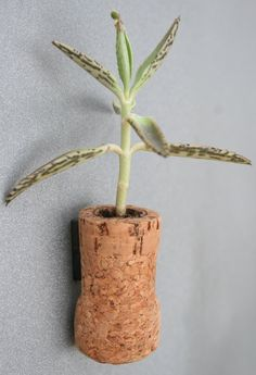 Succulent Cork Magnet