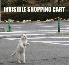 Kat met Onzichtbare Hula Hoop - Vrouwen.nl