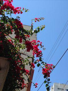 Flores em rua de São Paulo