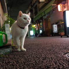 昨日はchama chamaさんからの慶さんroji rojiさんにもお会いして楽しい夜でしたそして路地には根津の守り神たろうさん