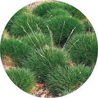 Creative Landscape, Garden Cottage, Herbs, Gardening, Lawn And Garden, Herb, Horticulture, Medicinal Plants