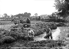 Fine Art Print-Removing Flax from the Lint Hole, Co. Fine Art Print on Paper made in the UK