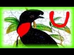 "Kids Learn the Alphabet with Puzzles - ""U"" is for Umbrella Bird - Kids Learn & Play Toy Puzzle Games - YouTube"