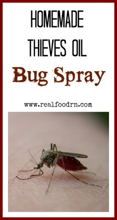 Homemade Thieves Bug Spray. Make some of this up and you will never need to use those chemical filled bug sprays ever again. This also protects against the plague. realfoodrn.com