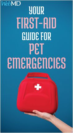 It's important to know some basic pet first-aid techniques. Learn more about some common pet emergencies and what to do on the spot, before you head to the vet. First Aid For Dogs, First Aid Kit, Emergency First Aid, Emergency Care, Bee And Wasp Stings, Heimlich Maneuver, Meds For Dogs, First Aid Treatment, N Animals
