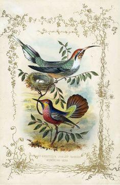 Старинные офорты для гостиной: Jerrard Gems 1852 год!.. PUBLIC DOMAIN