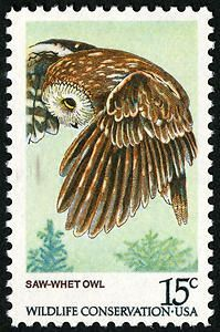 saw whet owl postage stamp - Google Search
