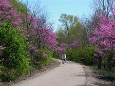Cardinal Greenway - Muncie Indiana.  27 miles.