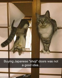 """24 Stupid Cat Pics And Memes That'll Have You Feline Good - Funny memes that """"GET IT"""" and want you to too. Get the latest funniest memes and keep up what is going on in the meme-o-sphere. Funny Animal Memes, Cute Funny Animals, Cute Cats, Funny Cats, Funny Memes, Memes Humor, Pretty Cats, Videos Funny, Cute Cat Memes"""