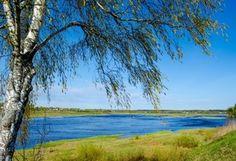Река, Весна, Pskov, Березы, Деревья, Природа