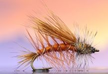 Fly fishing pictures | Fly dreamers