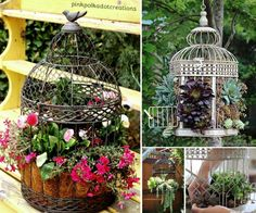 How To Make A Bird Cage Succulent Planter | The WHOot