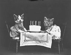Vintage cat photo by Harry Whittier Frees Retro Birthday, Cat Birthday, Birthday Cake, Birthday Memes, Birthday Parties, Age Chat, Cute Cats, Funny Cats, Baby Animals