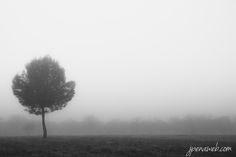 Dia de niebla