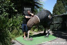 at rainbow springs in rotorua (new zealand) Rotorua New Zealand, Win A Trip, I Want To Travel, Auckland, Travel Around The World, Travelling, Rainbow, Vacation, Big