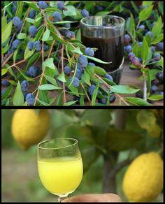 Due liquori tipici  #Mirto #Limoncello #Liquori #Digestivi #Sardegna #Sardinia #Drink Limoncello, Alcoholic Drinks, Cocktails, White Wine, Allotment, Cooking, Glass, Food, Italia