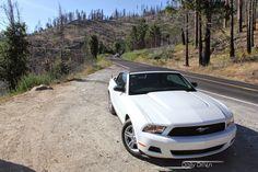 Daily USA Special Teil I: Ein Wildpferd im natürlichen Habitat Ford Mustang, Las Vegas, Habitats, Bmw, Vehicles, Autos, Ford Mustangs, Mustang Ford, Rolling Stock