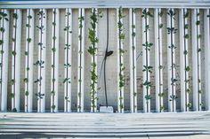 Esta guía de hidroponía para principiantes describe cómo crear tu propio jardín de hidroponía paso a paso y te ofrece recomendaciones para mejorar tu cosecha. via @holandespicante