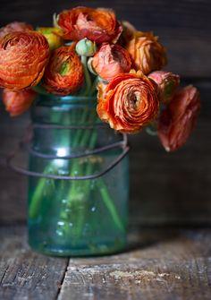 theurbanposer:  Ranunculus. LOVE. {For Mon Patisserie, grain free cookbook coming fall 2014} www.theurbanposer.com