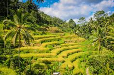 Tegalalong Rice Terraces, Bali