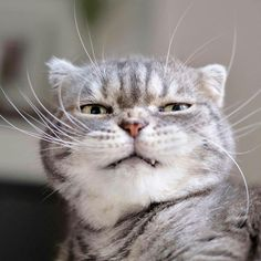 Soo you say you know my owner..umm yeah.. Ya still not coming in Animal Pictures For Kids, Funny Animal Pictures, Animals For Kids, Funny Animals, Cute Animals, Funny Images, Face Pictures, Animals Images, Kittens Cutest