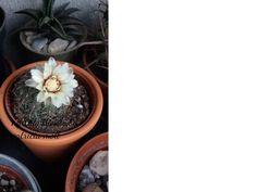 Non ricordo il nome di questa grassa però...il fiore merita! http://hermioneat.blogspot.it/2016/04/unfiorealgiorno-11.html