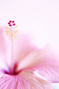 Hibiscus by Jacky Parker Floral Art, via Flickr