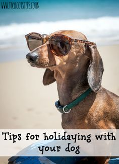 Tips for holidaying with your dog in the UK
