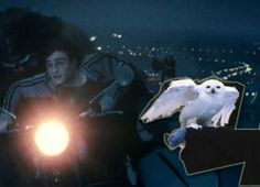 Harry Potter fan suggests new Hedwig theory #harrypotter #hogwarts #hedwig #jkrowling #popculture #popviralbuzz Pop Culture | PopViralBuzz