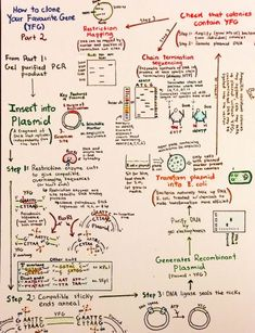 Introductory Biochemistry Flowcharts – Love, Life and Position-time Graphs Biology Classroom, Biology Teacher, Cell Biology, Ap Biology, Science Biology, Teaching Biology, Science Education, Life Science, Biochemistry Notes